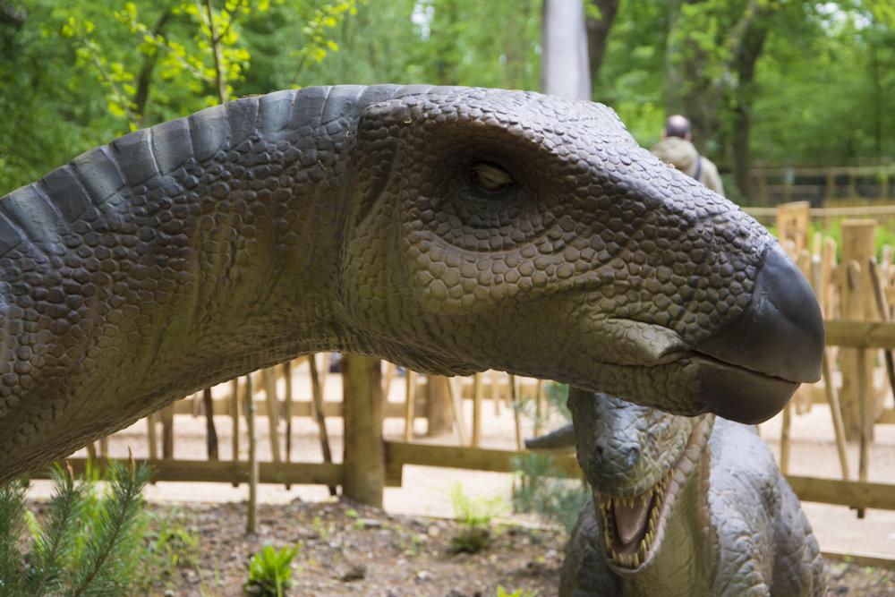 Iguanodon 1.jpg