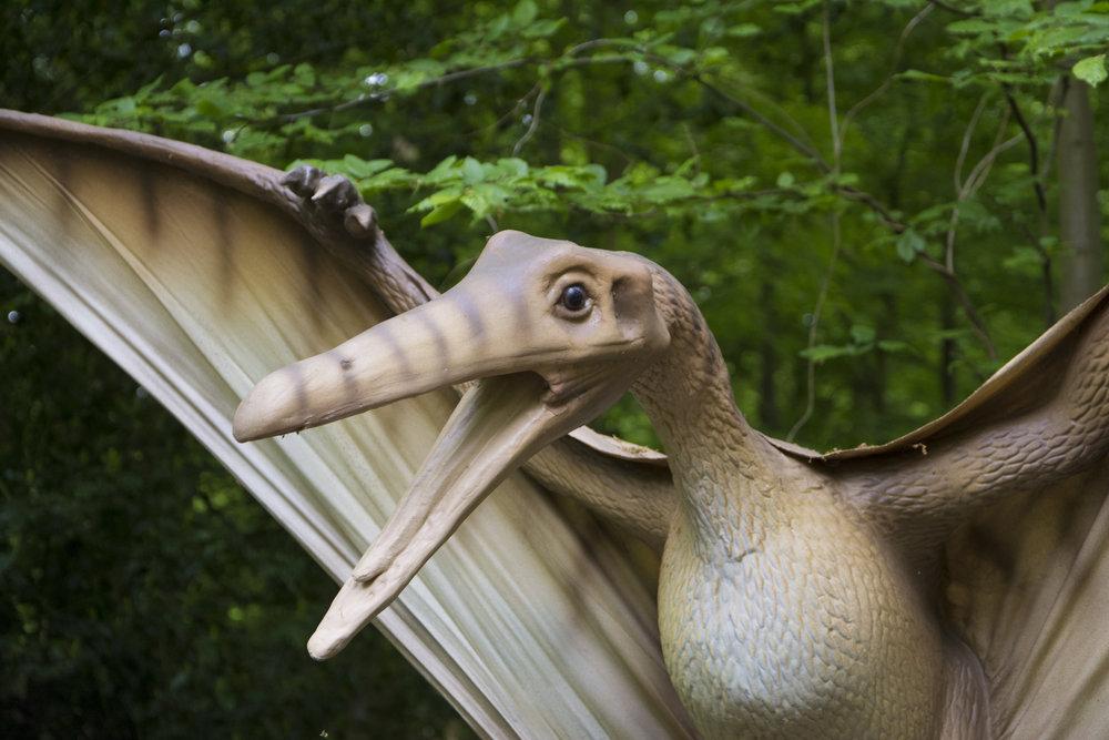 Pteranodon 2.jpg