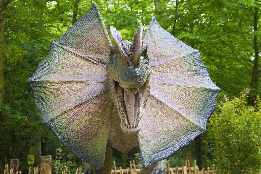 Dilophosaurus 3.jpg