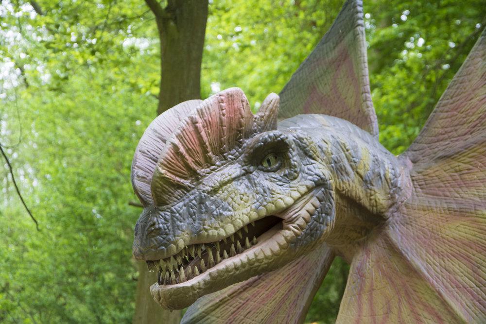 Dilophosaurus 4.jpg