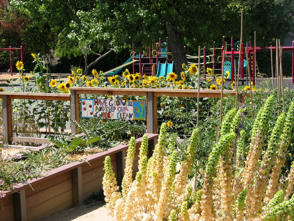 LeConte_Garden.JPG