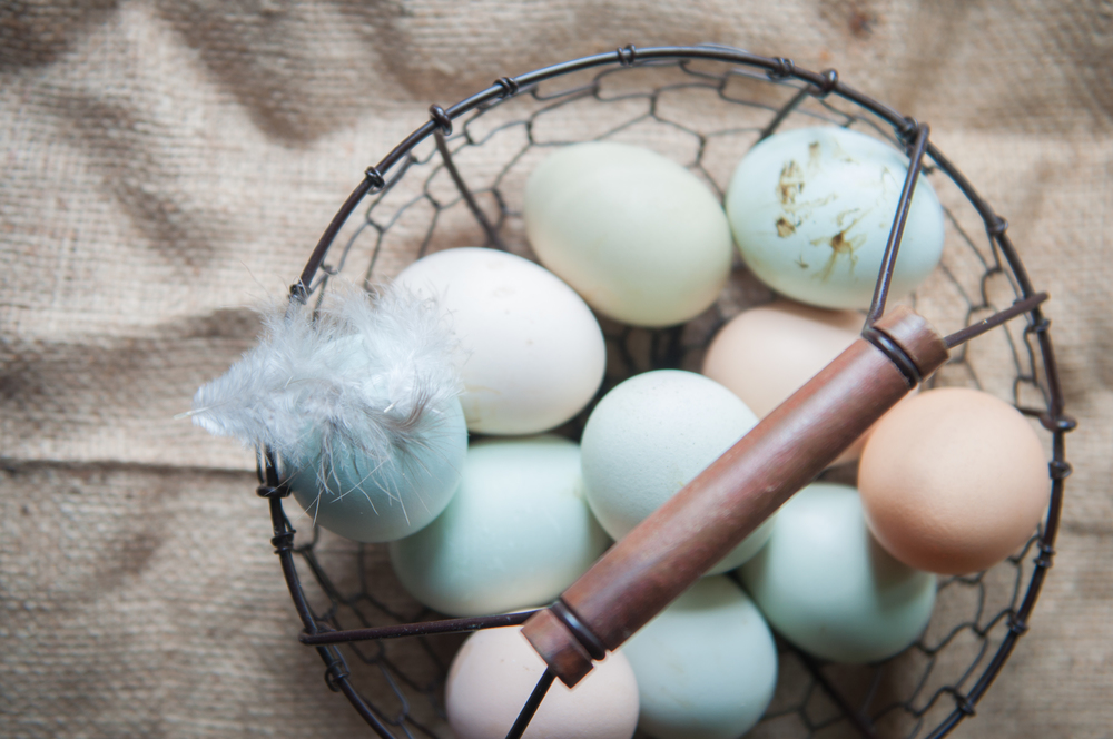 What's in Your Egg Basket?