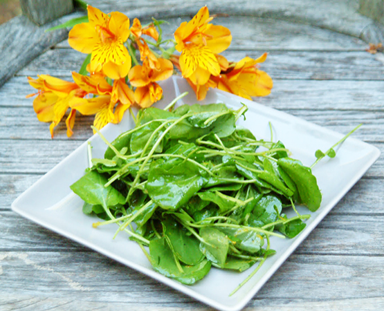 Watercress Salad with Citrus Dressing