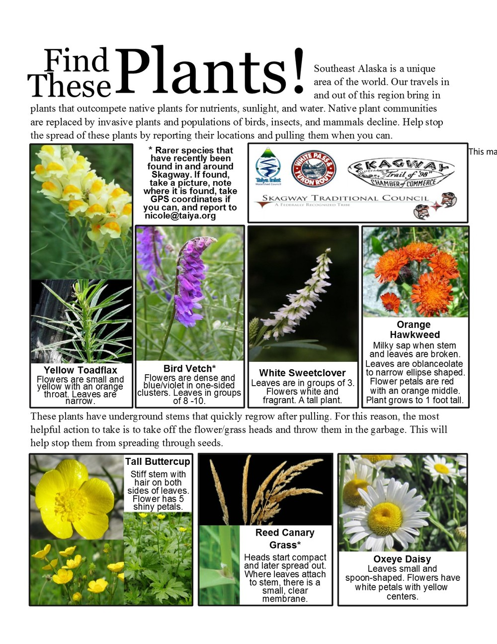 Invasive Species In Skagway Skagway Traditional Council