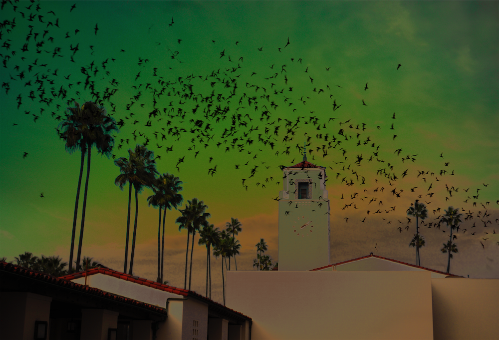 BATS AT UNION STATION