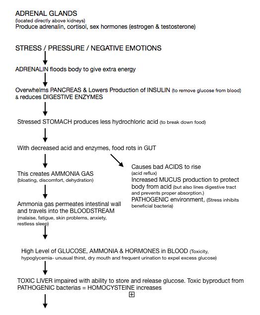 Adrenal Stress in Body