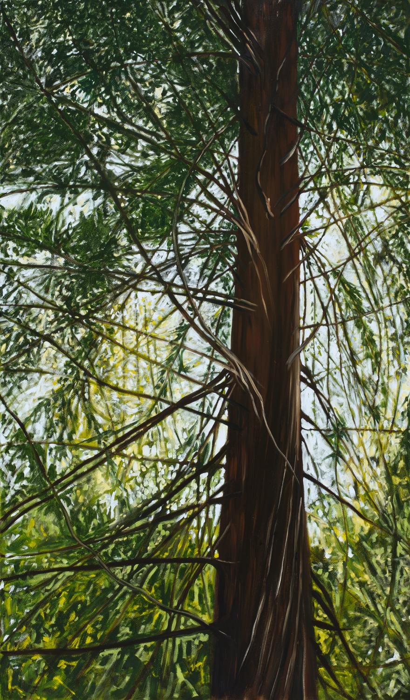 Redwood, 2016