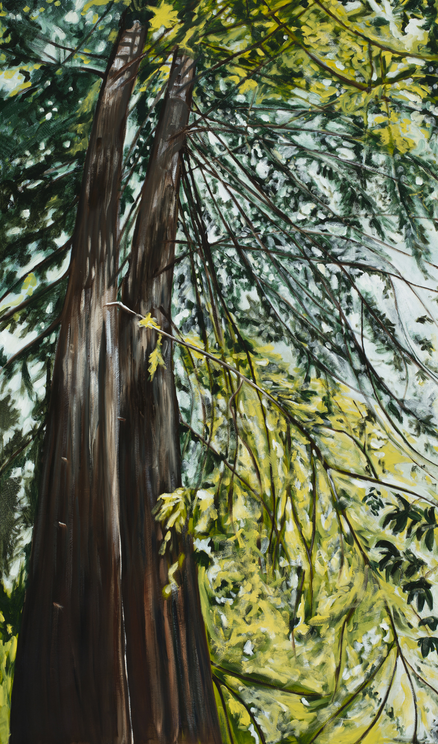 Twin Redwoods, 2016