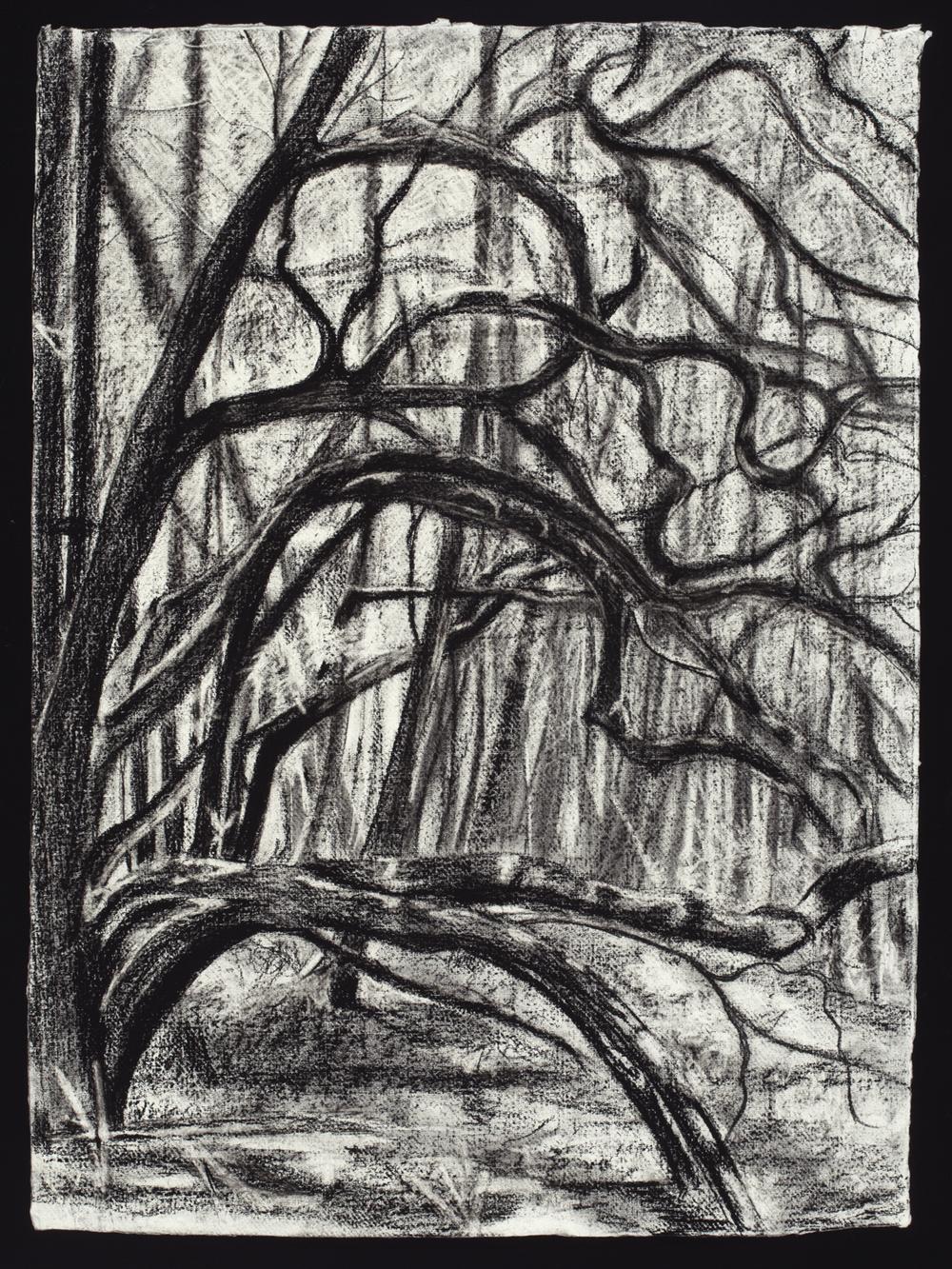 Coastal Oak, 2015