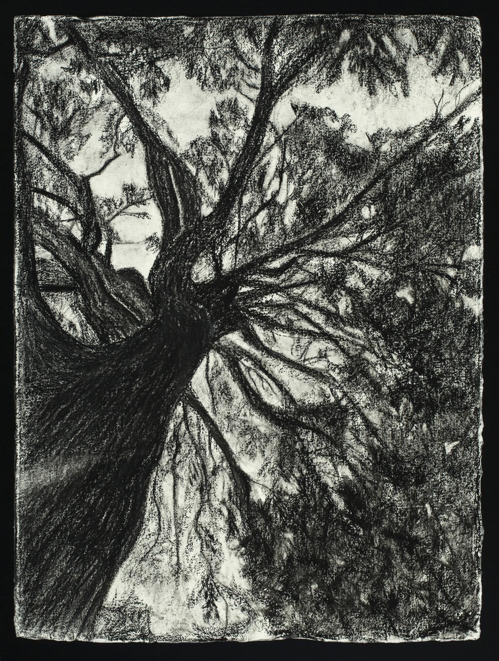 Oak, 2016