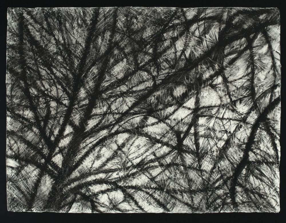 Pine Curtain, 2015