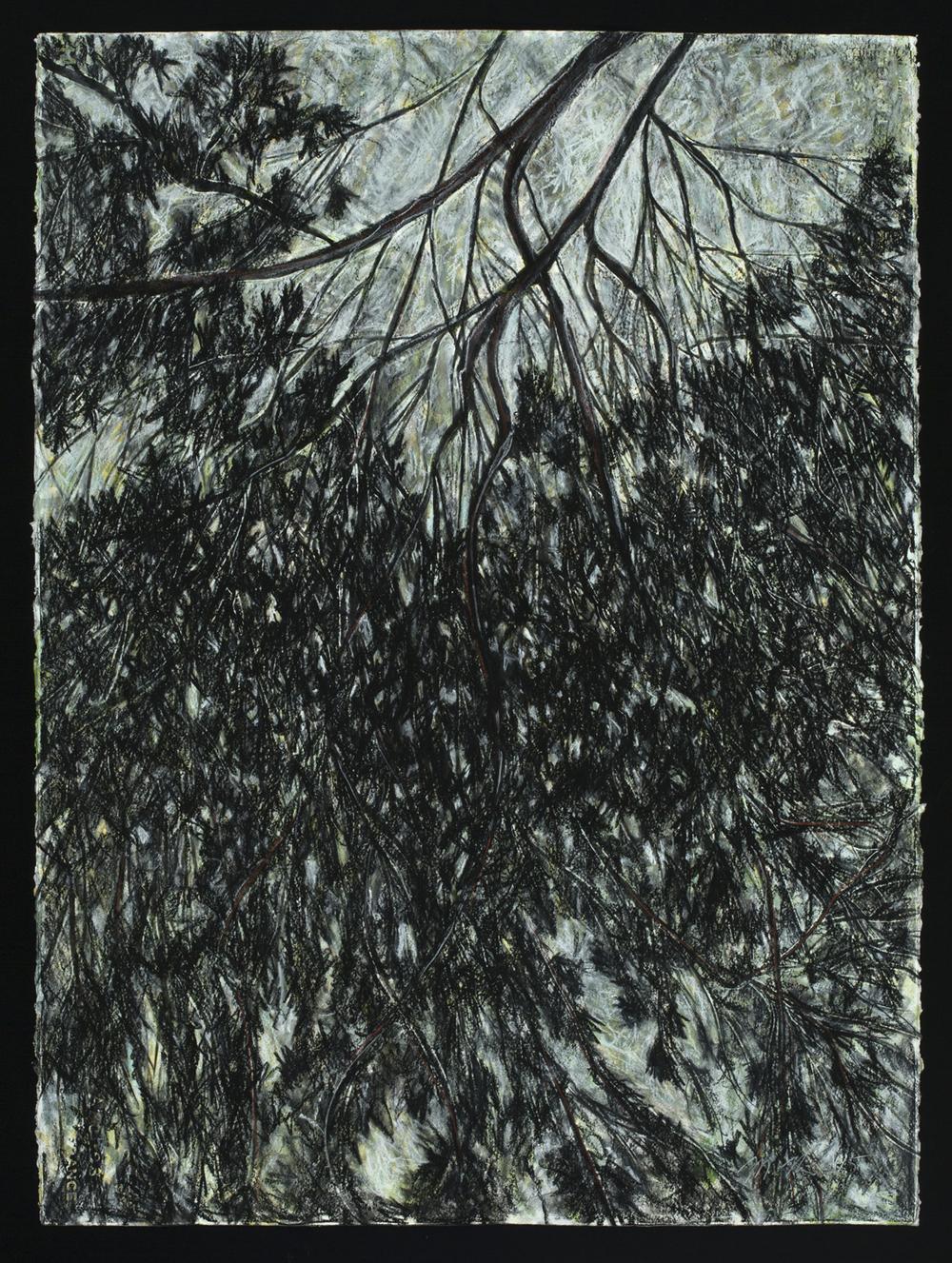 Riparian Curtain 2, 2015