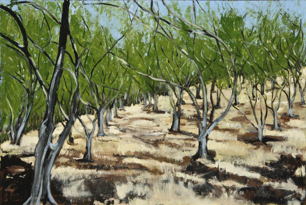 Olives, 2016-17