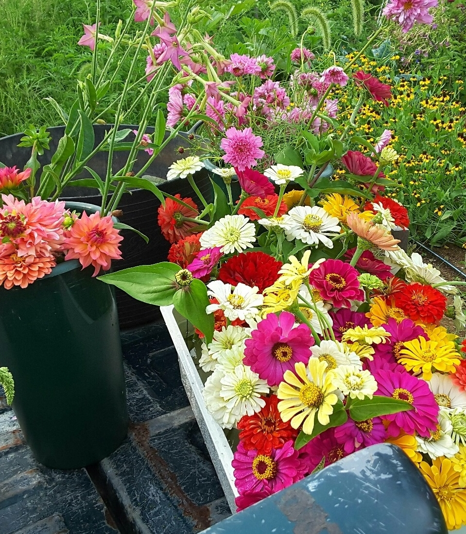 Flowers for you - We offer Bunches and Bouquets from May through frost to the home, business, or to the professional floral arranger.  Contact us for all of your needs.