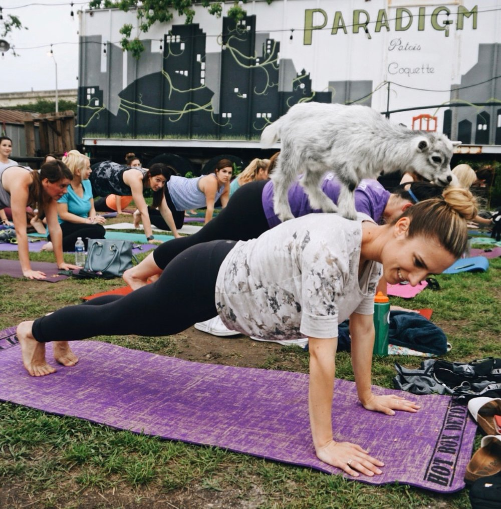 Goat Yoga in the Garden - Series currently on pause for the Summer!Returning Fall 2018, date TBATucked away in a lush garden oasis lies a little yogi sanctuary. As the weather gets cooler, and the sun sinks lower, we invite you to join Yoga with Bayefor a $20 Monday night yoga-in-the-garden series at Paradigm Gardens. The flowers are blooming, the vegetables are ripe, and the smell of fresh basil and rosemary herbs create the most amazing space for you to disconnect from the noise and settle into New Orleans fall. The event is only scheduled for 8 sessions, and there will be various perks across the weeks. RSVP and pre-purchasing of tickets via Eventbrite is required!