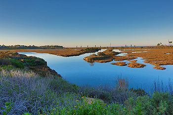 San Elijo Lagoon and Ecological Reserve