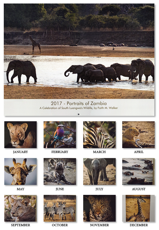 Take a look at the beautiful photos in our calendar.  Let each image inspire you to help us protect the amazing wildlife in Zambia.
