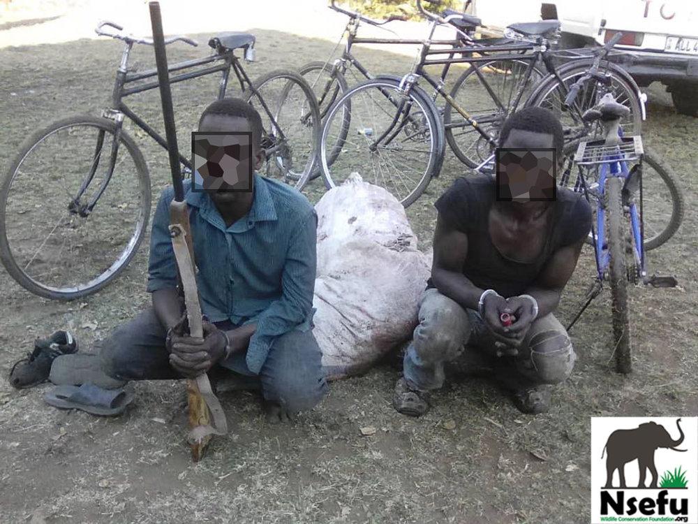 Poachers Arrested