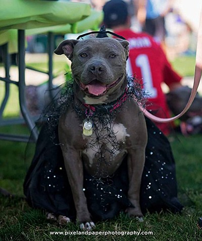 Above: Photo from a previous Carnival 4 Canines. Courtesy of Jackie Blue's Rescue Angels, Inc.