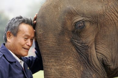 A Laotian elder with an older elephant at the second annual Elephant Festival in Paklay, Laos (Feb. 17, 2008).  Image Credit: AP Photo/David Longstreath