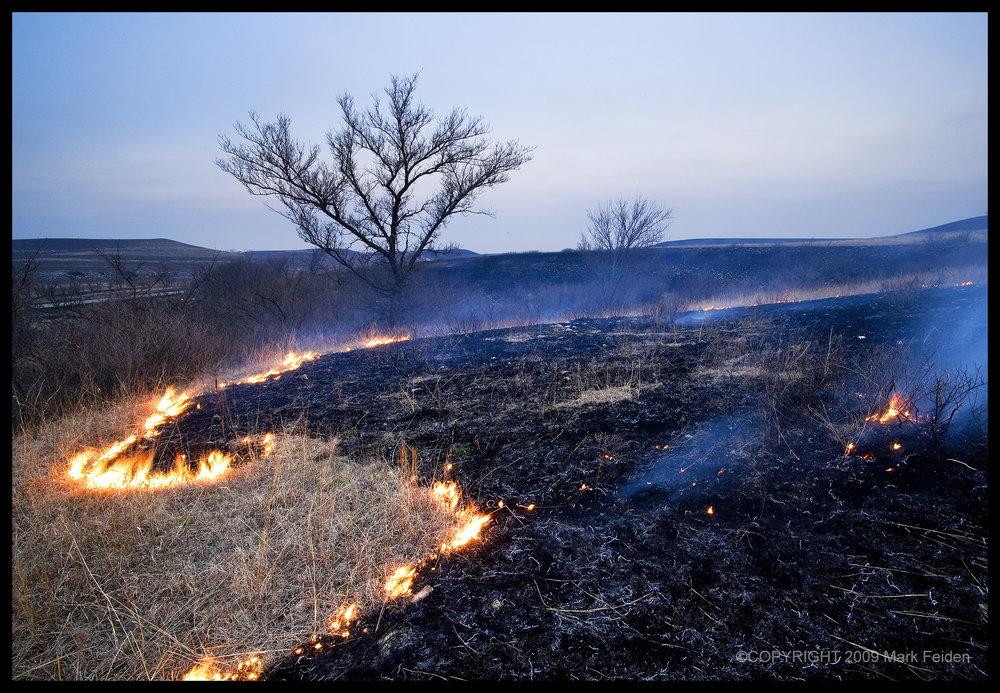 PF-023 Spring Burning