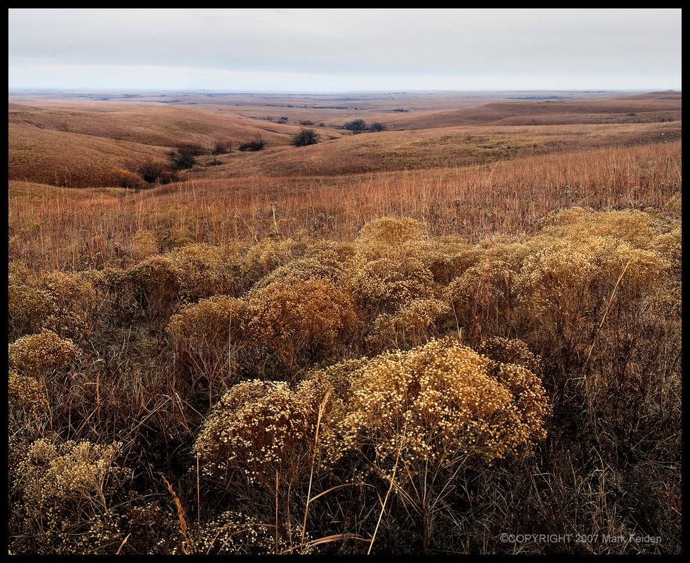 01-049 Winter Pastures