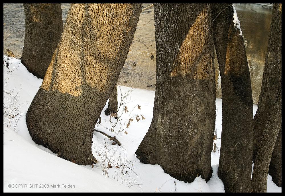 01-117 Elephant Legs