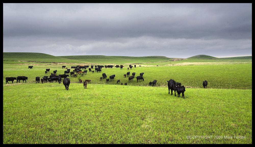 01-145 Farmer Township Pasture