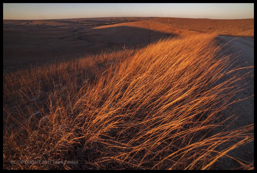 01-173 Winter Grass