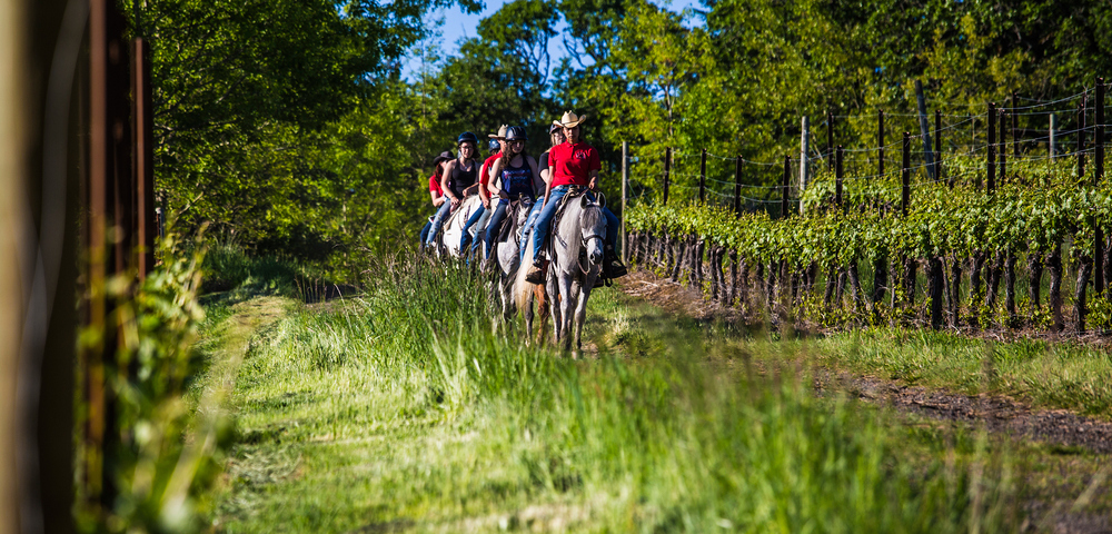 FiFiddlestix staffers guiding a trail ride in wwine coutnry. ddl