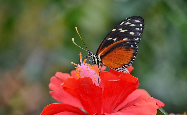 butterfly-611181_640.jpg