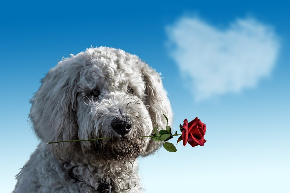 valentines-day-3135789_1920.jpg