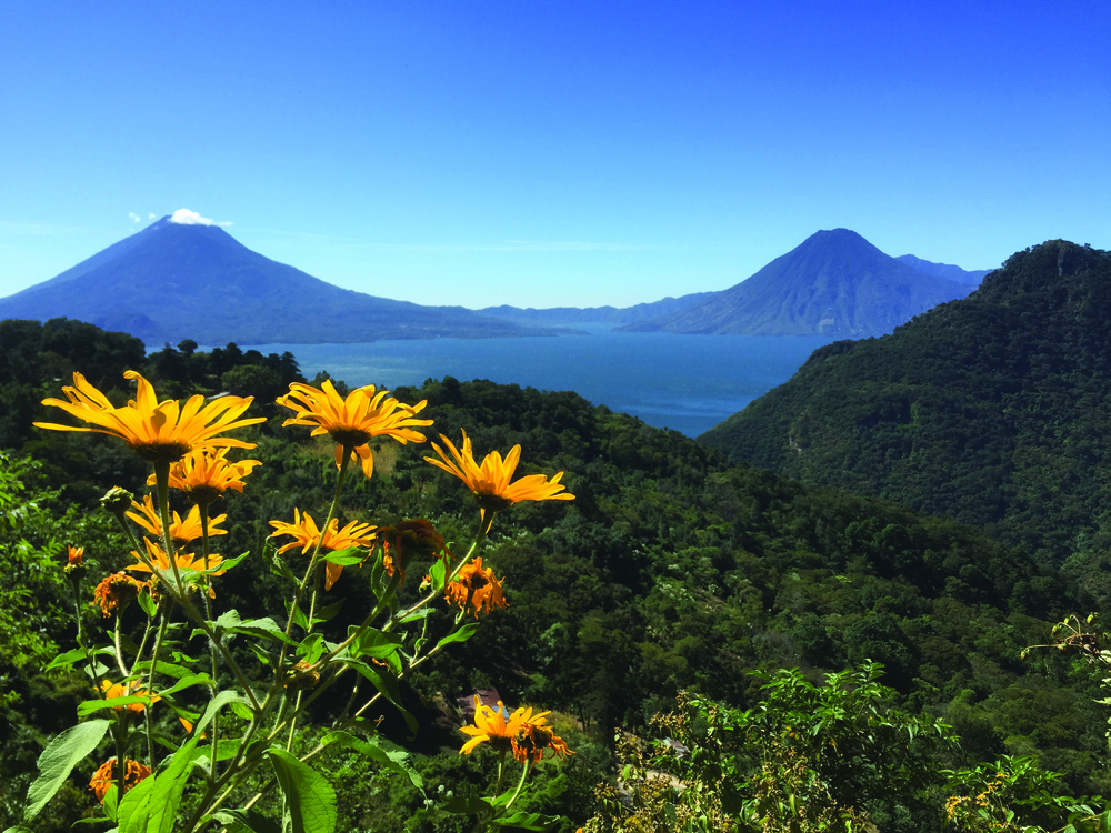 The picturesque mountains surrounding Lake Atitlan in Guatemala are the perfect environment for growing coffee.