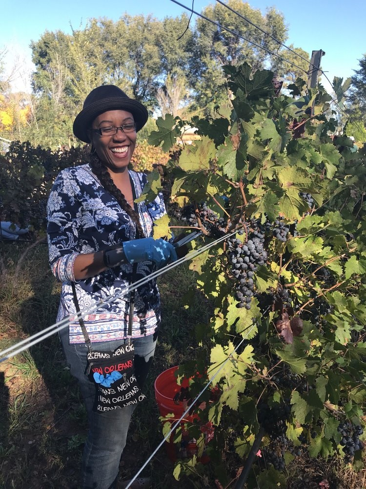 Harvest Party 2017 - She was happy to volunteer to pick grapes!