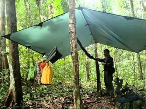 Hammock in Jungle.jpg