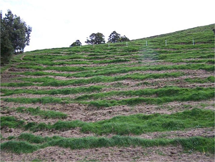 Sprayed strips on hill slope  in Moyarra