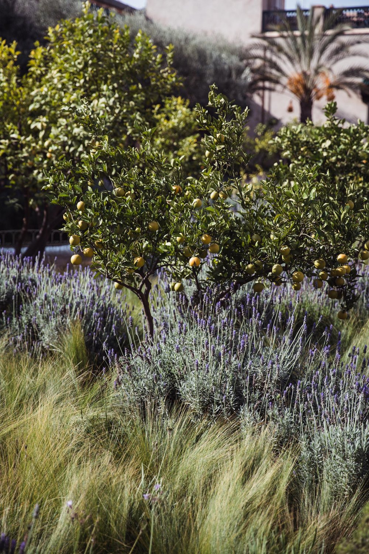 bellerose-guide-marrakech-2.jpg