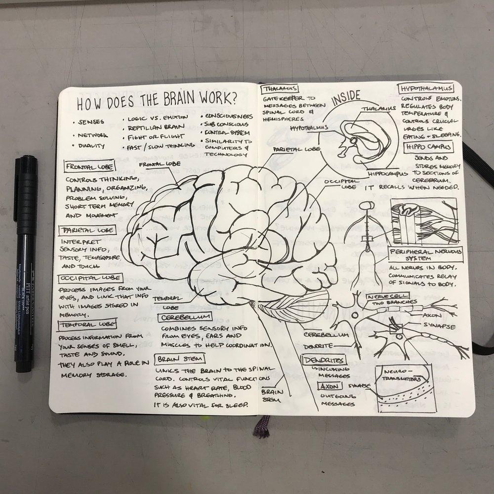 Understanding the brain. Pen and Moleskine Sketchbook.