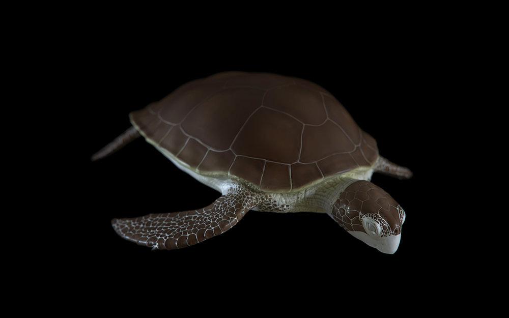 turtle-01.jpg