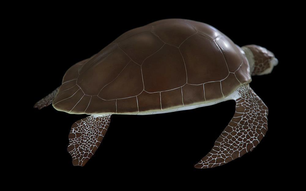turtle-03.jpg