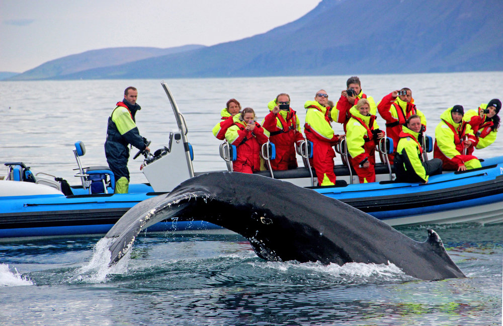 Whale Watching Atlantik Iceland Incentive Conference Cruise DMC PCO.jpg