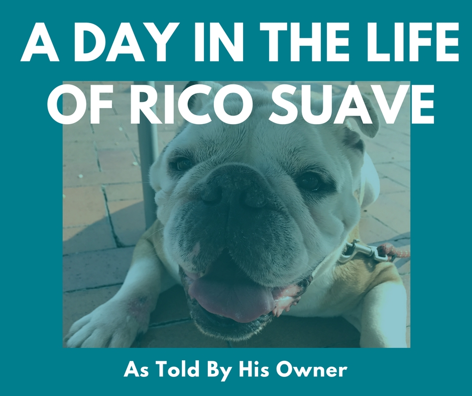 A Day in the Life of Rico Suave.jpg
