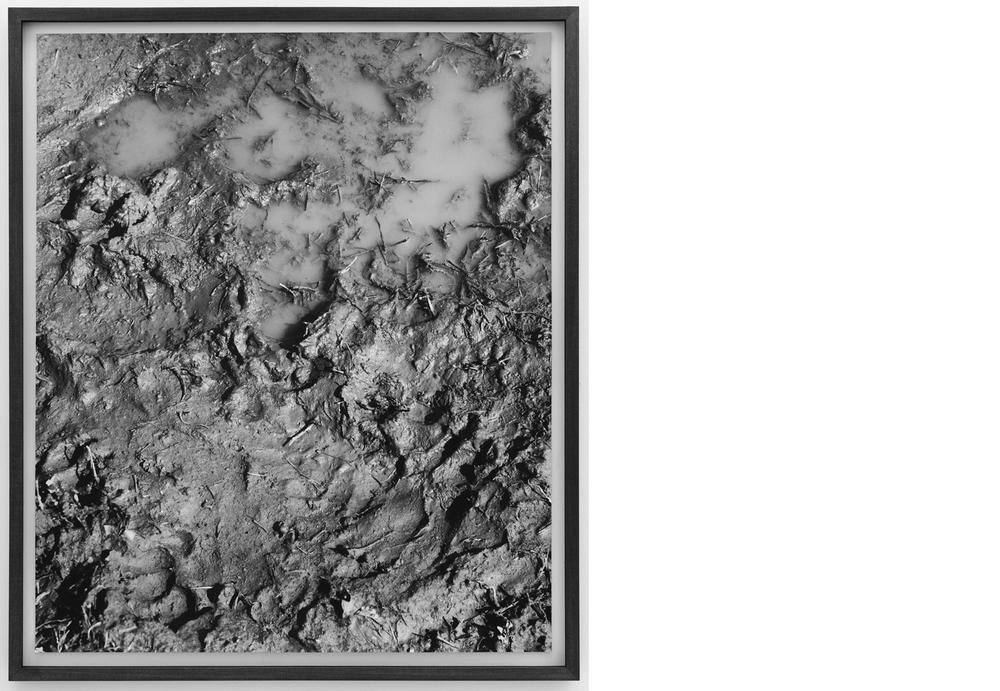 Mud 2011, Silver gelatin print, 24 x 20 inches