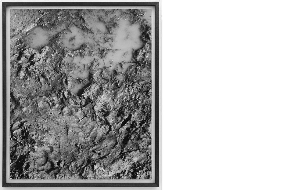 Mud  2011, Silver gelatin print, 24 x 20 inches