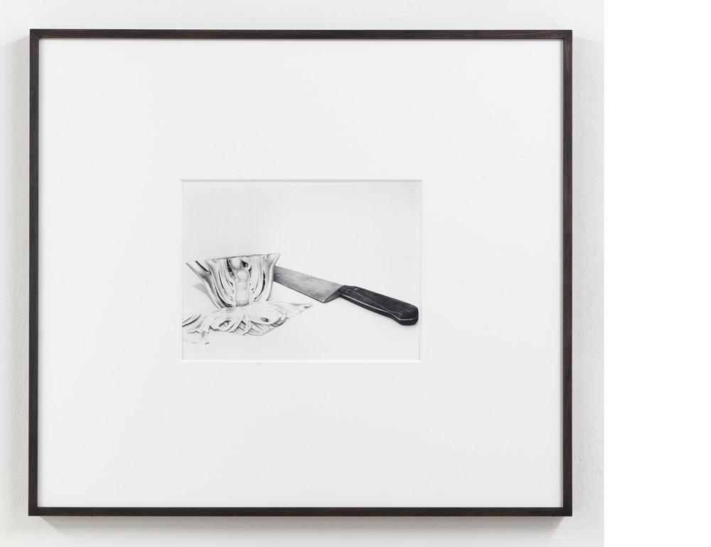 Fennel, 2015 , Silver Gelatin Print, 9 × 12 inches ,23 ½ × 26 ½ inches framed