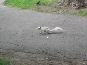 The Ghost Squirrel of Montreal