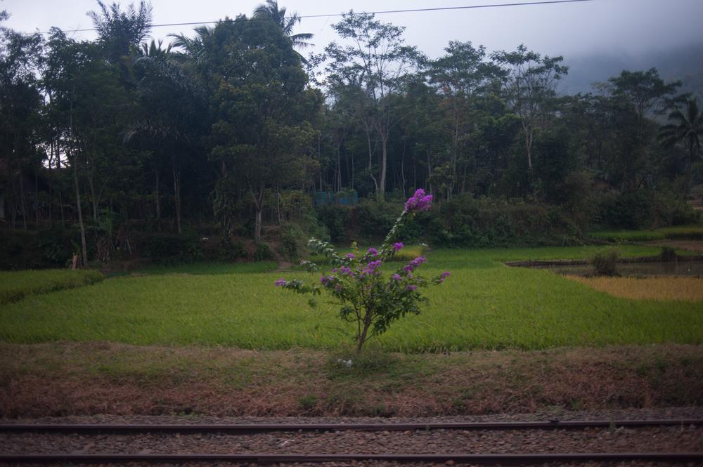 20120726_KEVINMICHAELBRIGGS_indonesia_001-2.jpg