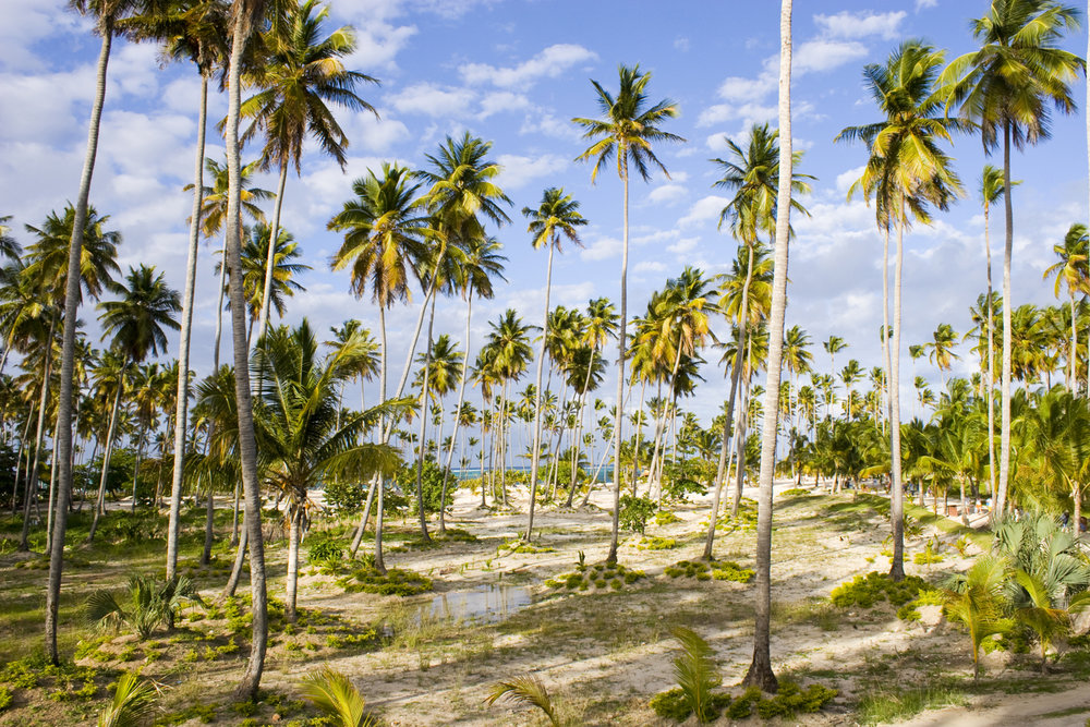 dominican-palms.jpg