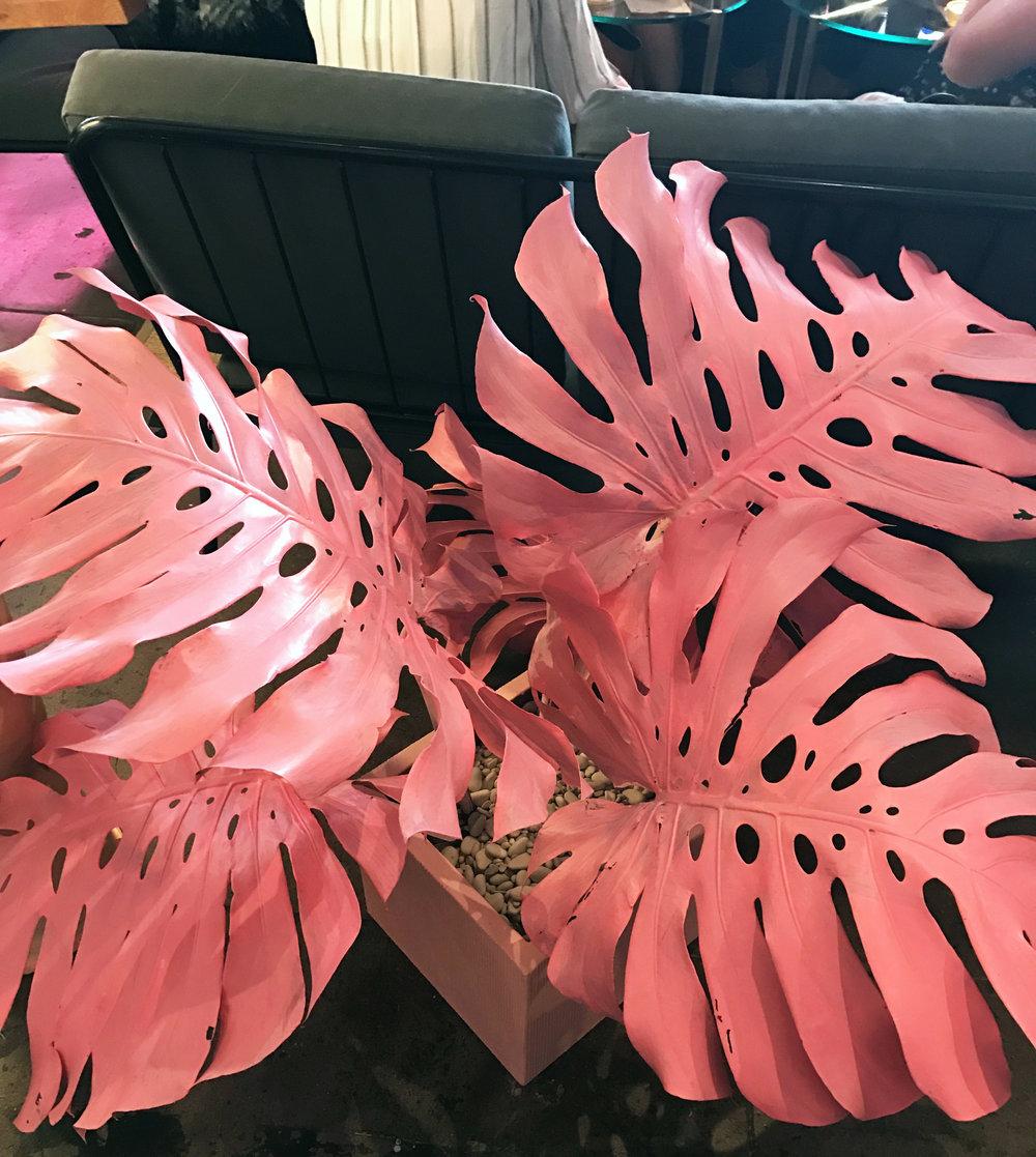 pink plants