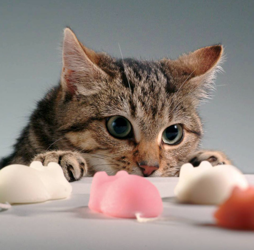cat with mice 2 web.jpg